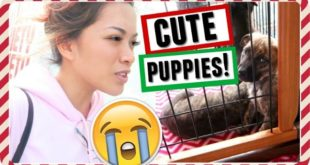 WE WANT ANOTHER PUPPY!   Vlogmas 22, 2016